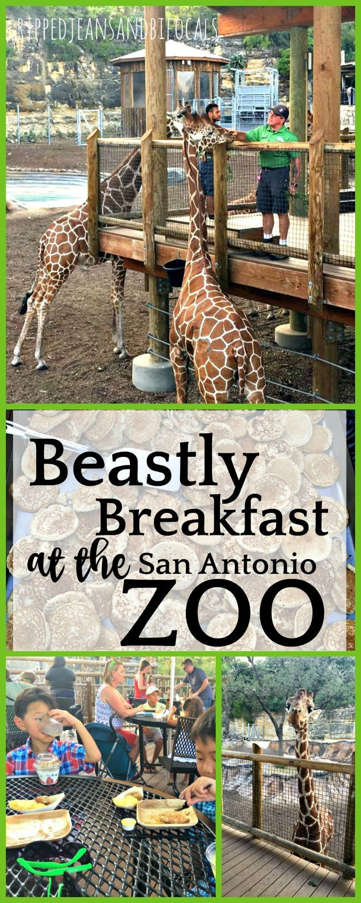 Beastly breakfast at the san antonio zoo san antonio zoo