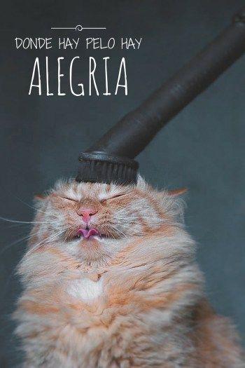 pelos de gato cat lover