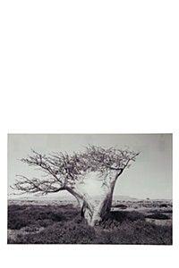 TEMPERED GLASS TREE 60X90CM WALL ART