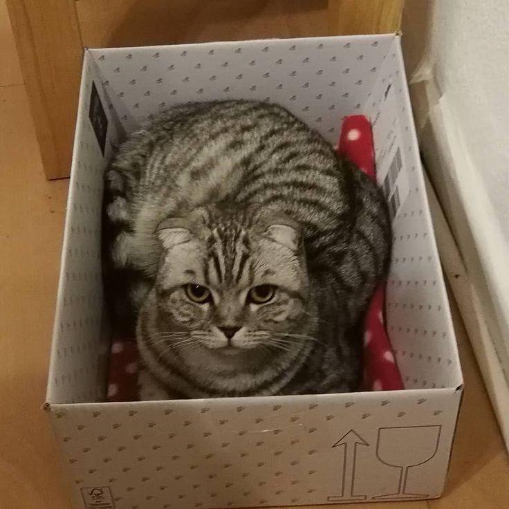 Katze In Der Box