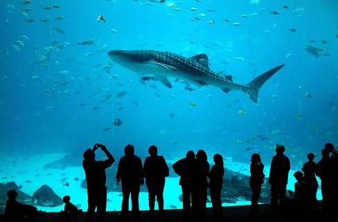 Georgia Aquarium - Potentially the best aquarium in the U.S.
