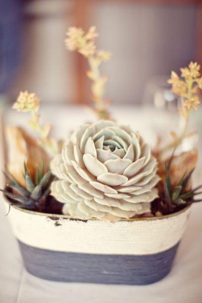 love the colorsSoft Colors, Simple Centerpieces, Diy Gift, Plants, Gardens, Gift Cards, Wedding Flower, Floral, Succulents Arrangements