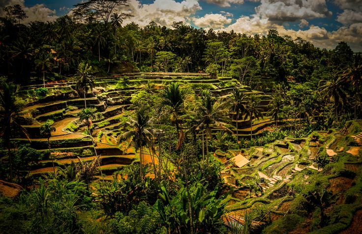 Development Of #Agrotourism Through Community Organizing Of #Tourism Village #Indonesia
