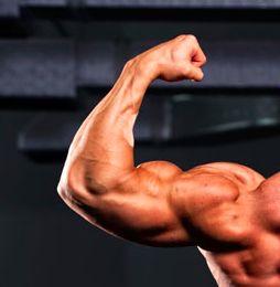 Allena i tuoi muscoli!