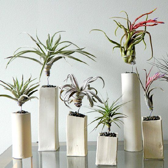minimalist air plant displays surreal seeing plants growing above the ground plants. Black Bedroom Furniture Sets. Home Design Ideas