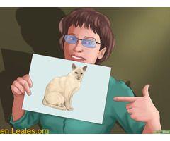 CONSEJOS PARA BUSCAR GATOS PERDIDOS  #Perdido #Encontrado #sebusca #extraviado #LealesOrg  Contacto y info: Pulsar la foto o: https://leales.org/perdidos-o-encontrados/gatos-perdidos/consejos-para-buscar-gatos-perdidos_i1371 ℹ   Cómo encontrar un gato perdido  4 métodos:Buscar de forma eficazSaber dónde buscarIncentivar al gato para que regreseCorrer la voz  Si has perdido a tu gato hay muchas cosas que puedes hacer para encontrarlo. Por lo general los gatos se ocultan cuando se pierden y…