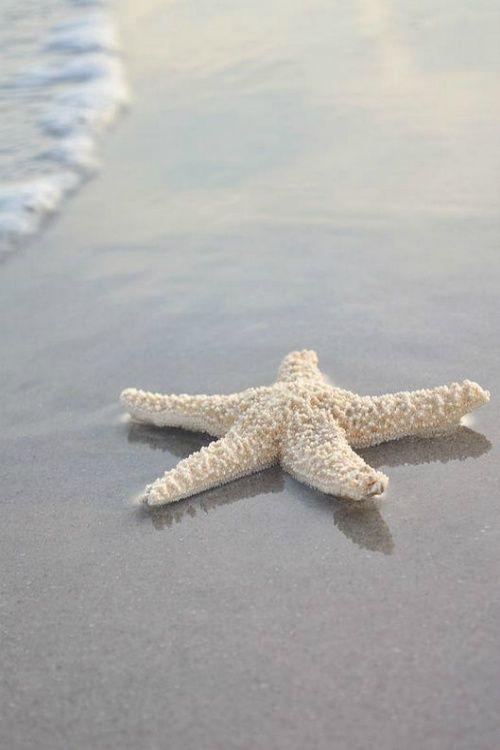 Beach Life | www.ruiterplaat.nl