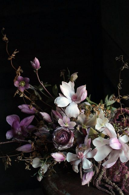 Saipua | Sarah Ryhanen magnolia