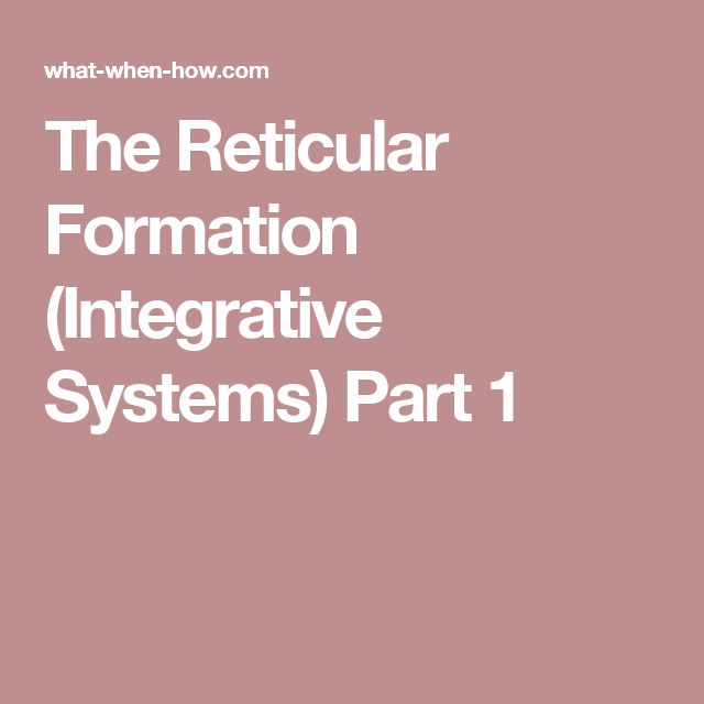 The Reticular Formation (Integrative Systems) Part 1