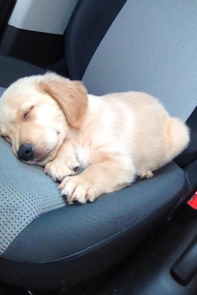so tired after my outing.