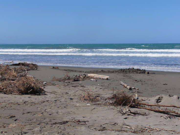 Woodend Beach, North Canterbury. By Catherine McPhie