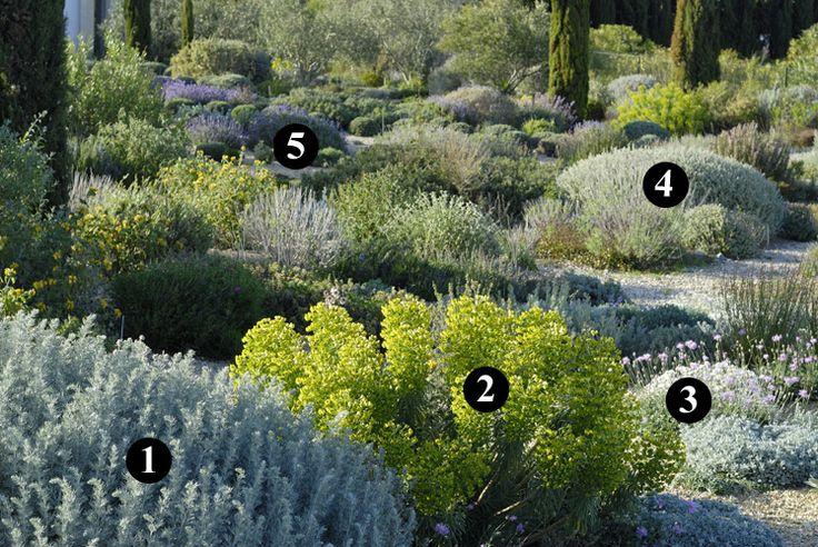 1 : Artemisia canariensis 2 : Euphorbia characias subsp. wulfenii 3 : Centaurea bella 4 : Ballota acetabulosa 5 : Lavandula dentata 'Adrar M'Korn'