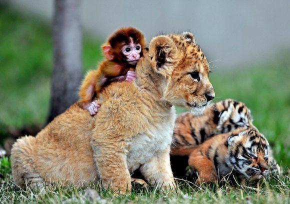 unlikely animal friends | Unlikely Friends | Cutest Paw