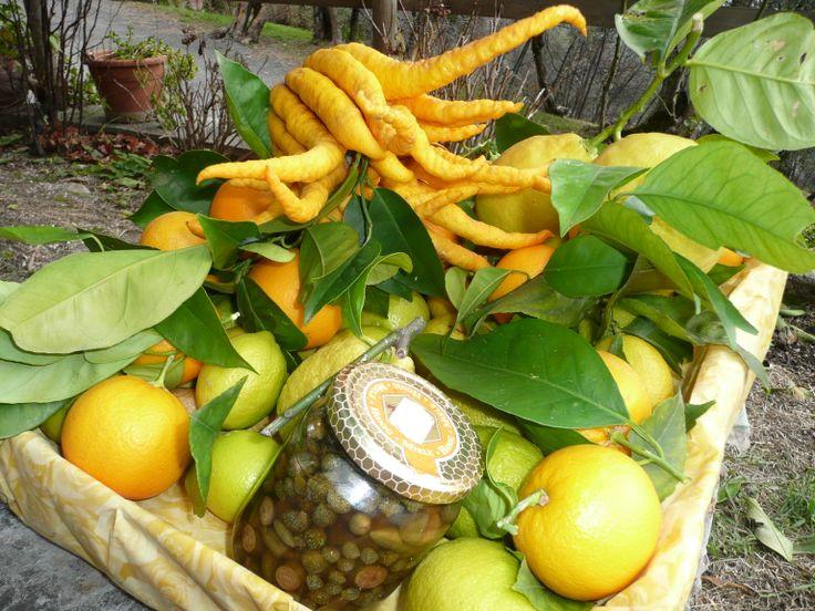#citrusfruits #lakegarda #zitrusfruchte #gardasee @Lago Di Garda Lombardia #localproduct