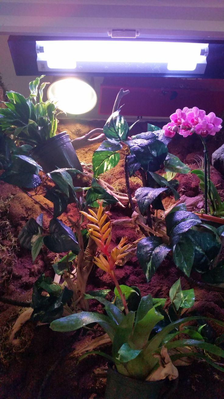 17 Best Images About Diy Chameleon Enclosure Vivarium On