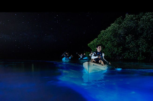 Bioluminescent Bays - Vieques, Puerto Rico | Visitors to Vieques can experience the bioluminescent bay by booking a kayak tour after dark (several companies operate in the area; try Kayaking Puerto Rico). Plan to visit on a night with no moon, so as best to see the lights in the shallow bay waters.