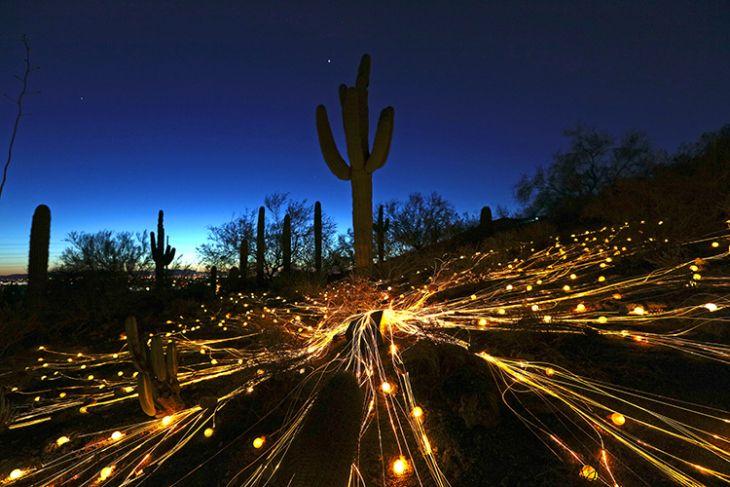 132 Best Images About Landscape Lighting Trends On Pinterest