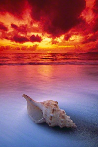 Unidentified mollusk shell at Sunrise