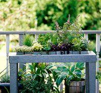 Start an Herb Garden