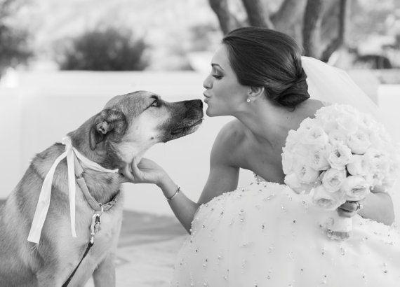 ワンちゃんと結婚式 ペット ウェディング