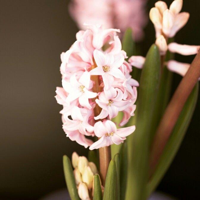 Flowers#spring