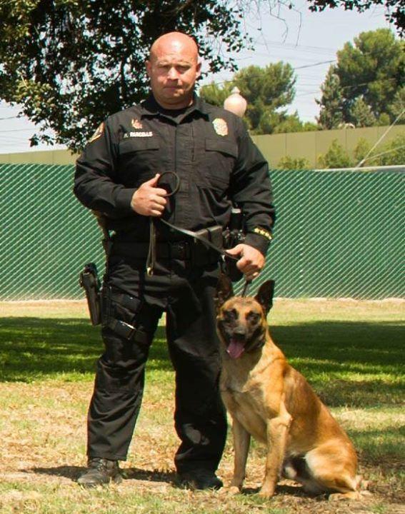 606 best Respect #dogs images on Pinterest German shepherd - k9 officer sample resume