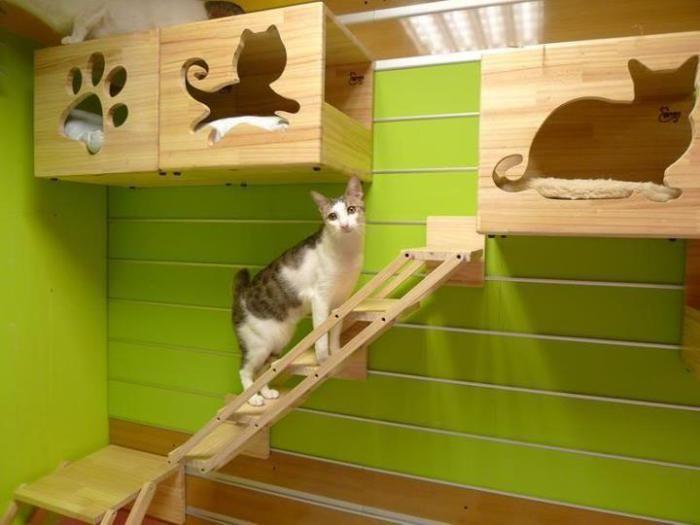 Móveis, pets, decoração
