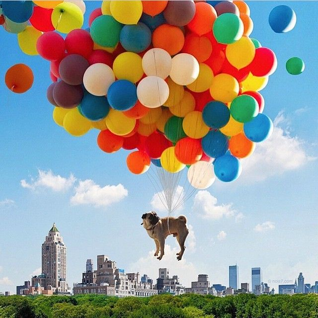 """""""Pensamentos felizes fazem a gente voar..."""" 💭😄😄😄 #bomdia #regram @nois7"""