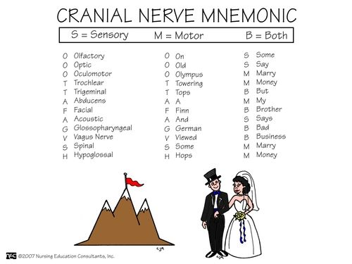 Cranial Nerve Mnemonic....this is for the students..... :)  there is also Oh Oh Oh To Touch And Feel A Girl's Vagina So Hot to remember name of nerve