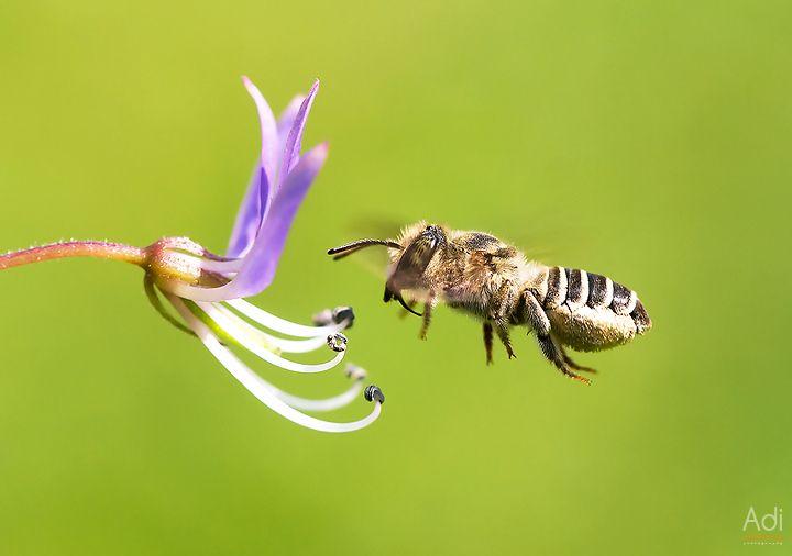 Just bee activity