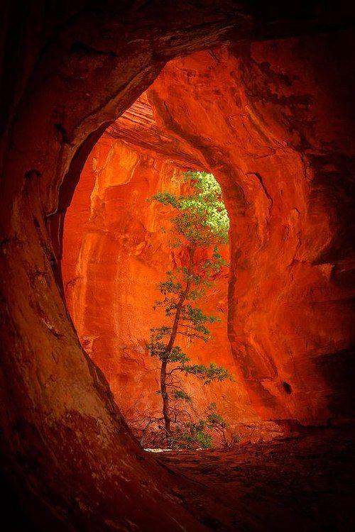 Vida en la cueva...