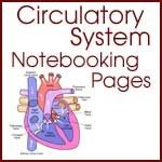 Circulatory System Notebooking Pages - link also contains other anatomy notebooking pages