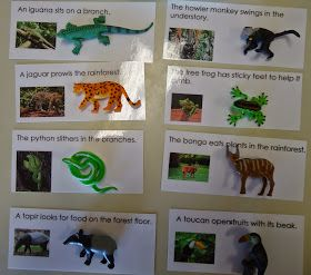 Reading Sentences: Animals of South America
