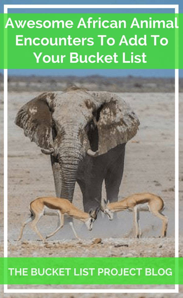 Awesome African Animal Encounters to Add to Your Bucket List! - The Bucket List Project