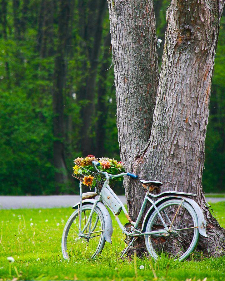 Vintage bicycle with basket of flowers