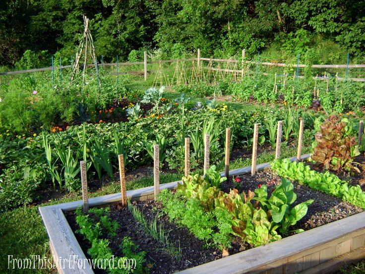 vegetable and herb gardens. must have.