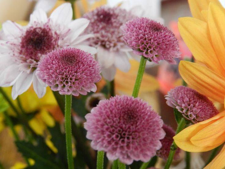 Mañana te esperamos para que te lleves las flores más frescas... Estamos en el Mall del Este ingreso calle 10