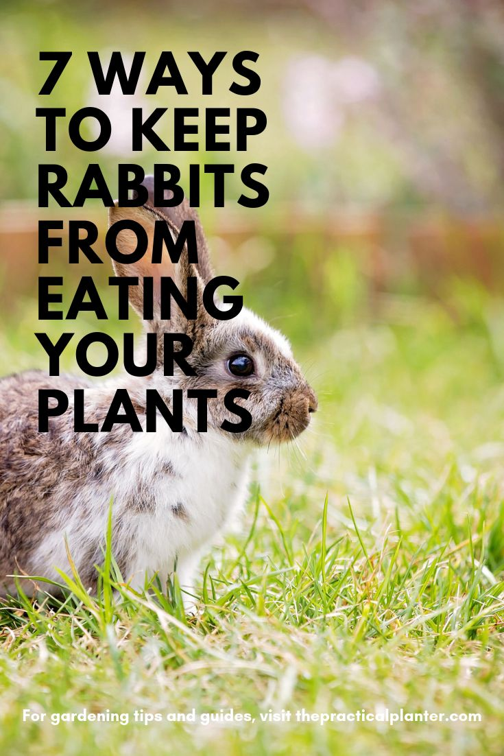How to Keep Rabbits from Eating Your Plants (7 Effective ...
