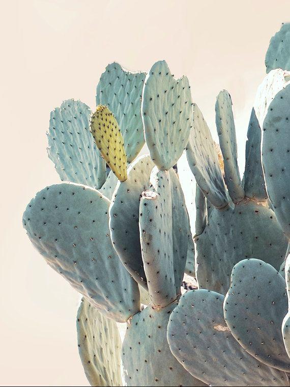 Cactus Print Cacti Art Cactus Photo Minimal by WilderCalifornia