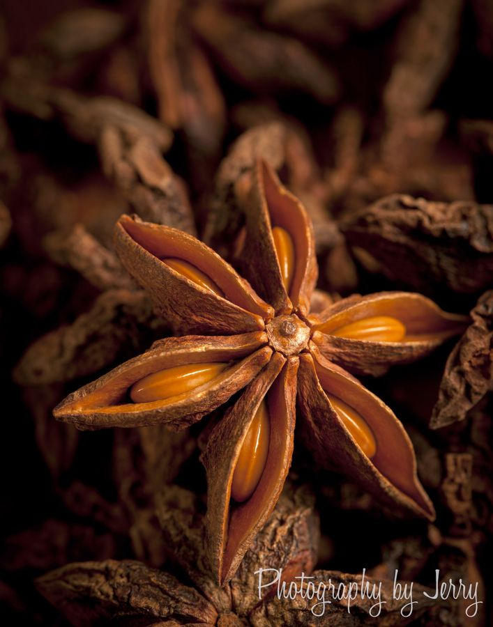 Star Anise by Jerry Deutsch,Photographer, Seedheads ,Seed Pods and Seed Picture , Photo Metaphor and Inspiration for CAPI Art Students at milliande.com,