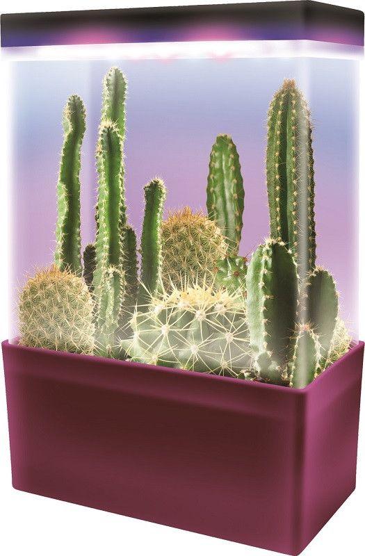17 best ideas about mini cactus garden on pinterest cacti garden indoor cactus garden and. Black Bedroom Furniture Sets. Home Design Ideas