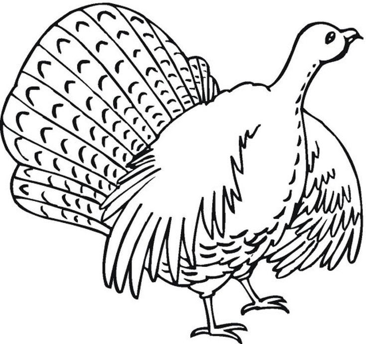 Print a Free Turkey Coloring Page for the Kids to Color: Coloring Book Fun Turkey Coloring Pages