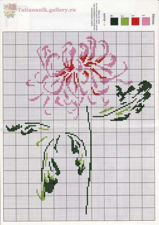 Very pretty chrysanthemum