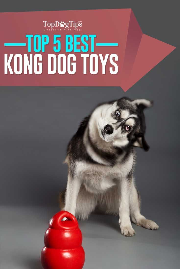 Dog Toys 5 Best Kong Dog Toys For Puppies And Adult Dogs Dog