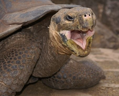 10 pictures of happy turtles, and possibly tortises and terrapins too. (Dammit Jim! I'm a doctor, not a biologist!) From the single serve site ecstaticturtle.com, which is exactly what it sound...