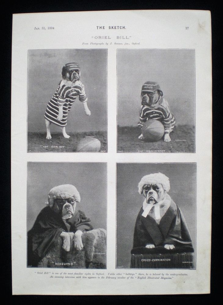 ORIEL BILL OXFORD UNIVERSITY COLLEGE BULLDOG DOG 1pp PHOTO STUDY 1894. Pinned by Judi Crowe.
