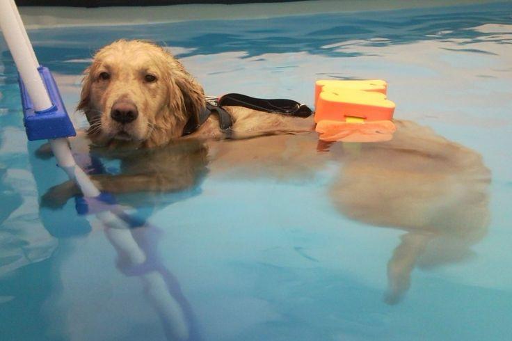 Il Viaggiatore Magazine - Cane in piscina