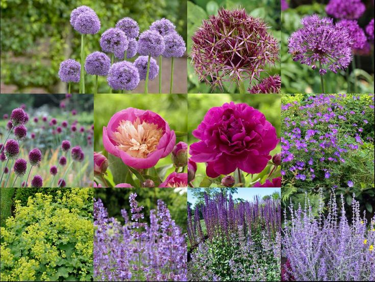 Beautiful Outdoor Flowers For Sale Part - 6: See How A Garden Designer Puts Them To Work