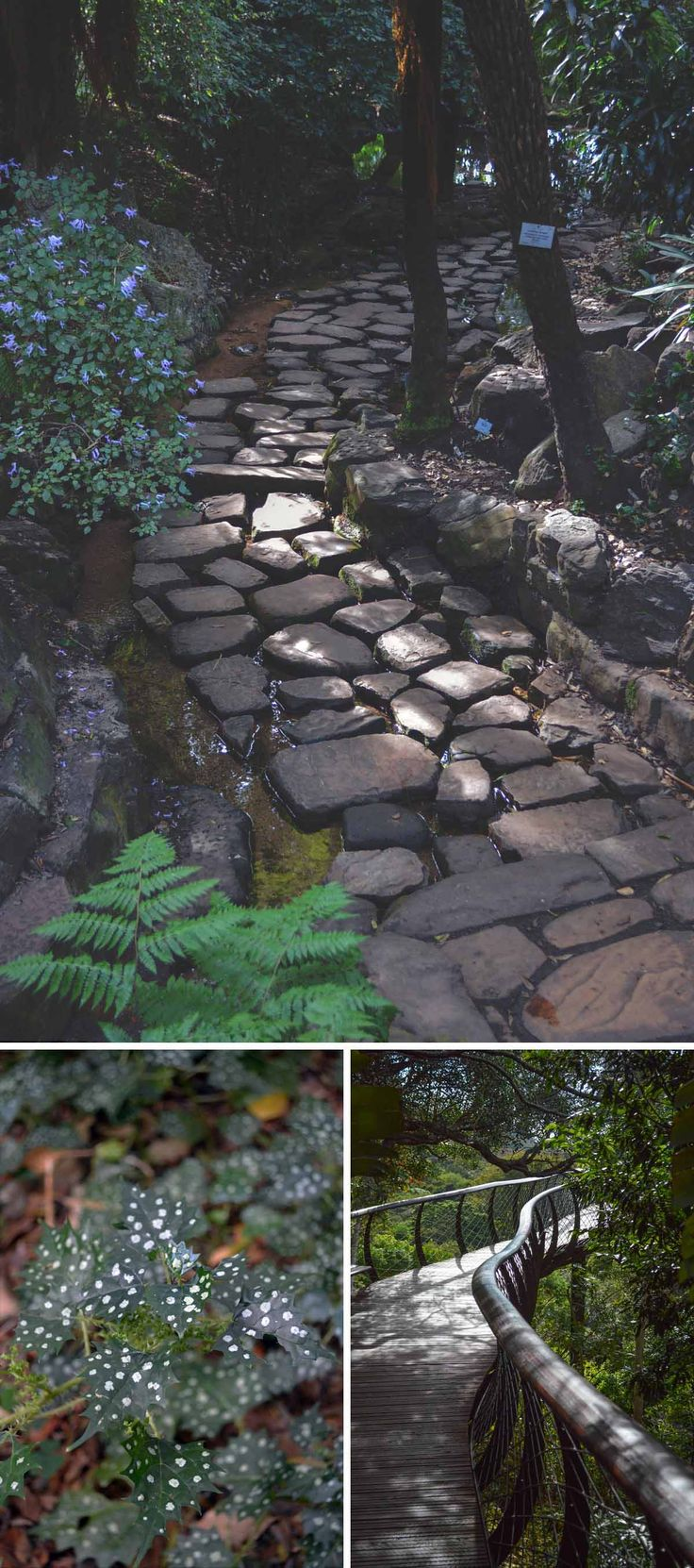 The Dell at Kirstenbosch Botanical Gardens, Cape Town | heneedsfood.com