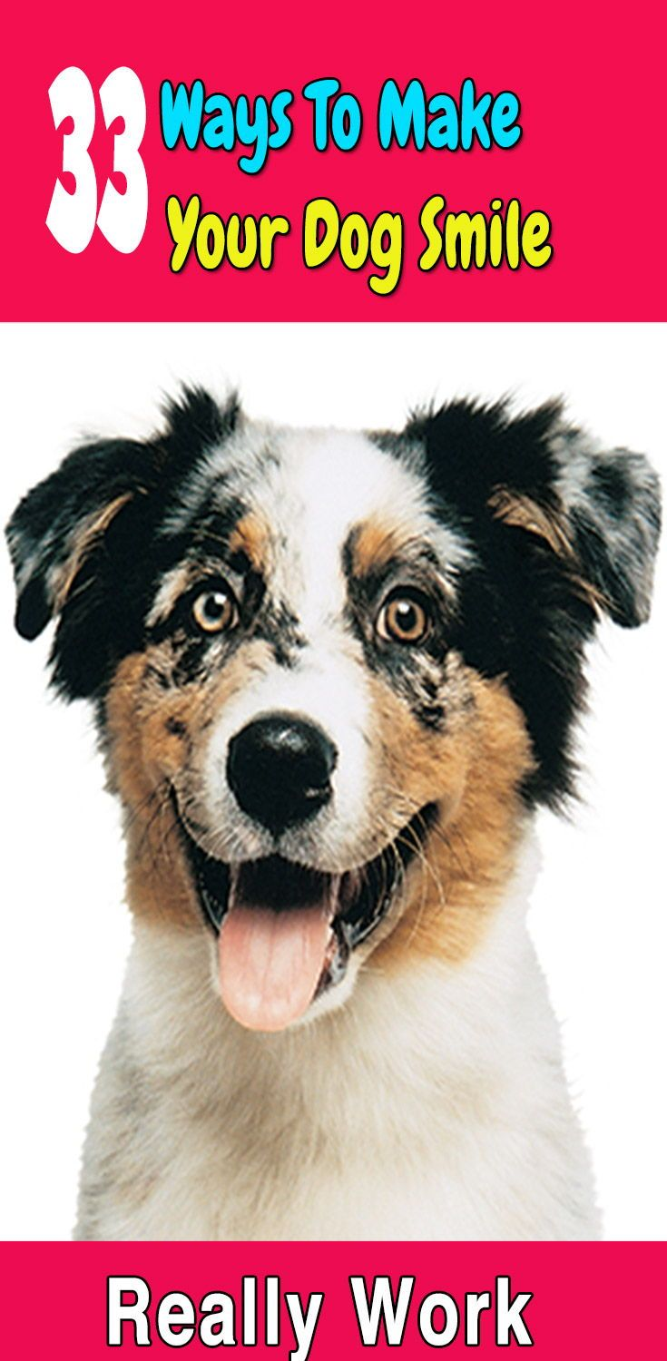 Dogs Are The Best Pets In The World Dogs Are Extraordinary Creatures It Is So Easy And So Much Fun To Make Your Dog Happy Smiling Dogs Your Dog Dog Obedience